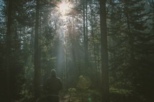 This image is from unsplash.com